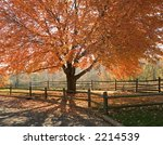 A beautiful Autumn shade tree in full seasonal colors at a state park in New Jersey. - stock photo