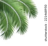green palm leaf isolated on... | Shutterstock . vector #221468950