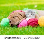 Stock photo bordeaux puppy dog and newborn kitten sleeping together on green grass 221480530
