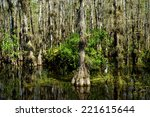 View Of The Florida Everglades...