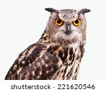 Stock photo eagle owl in closeup isolated on white background 221620546