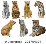 Collection of  big cat ...