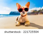 chihuahua dog at the ocean...   Shutterstock . vector #221725504