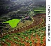 paddy fields  terraced culture  ... | Shutterstock . vector #221753524