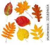 Set Of Autumn Leaves  Maple ...