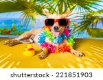 chihuahua dog under the shadow... | Shutterstock . vector #221851903