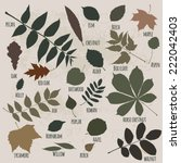 Vector Silhouettes Of Leaves ...
