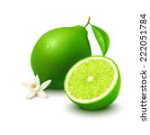 whole lime with leaf  half and... | Shutterstock .eps vector #222051784