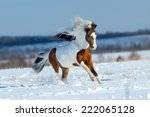 Small Horse Running In The Sno...