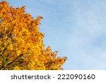 Autumn Colored Maple Tree...