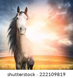 Stock photo  horse portrait with mane and raised leg in sunset light 222109819