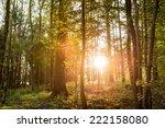sun shining through trees in a... | Shutterstock . vector #222158080