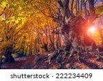 Majestic Autumn Trees Glowing...
