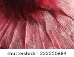 Close Up Of Onion  Macro
