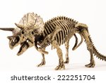 Triceratops Skeleton Isolated...