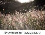 sunset on reeds | Shutterstock . vector #222285370