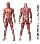 medical 3d illustration of the... | Shutterstock . vector #222305086