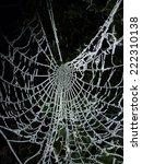 frozen cobweb | Shutterstock . vector #222310138