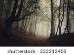 Road Through Dark Forest In...