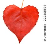 Red Leaf Heart Isolated On...