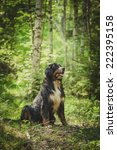 dog in the woods in nature... | Shutterstock . vector #222395158