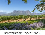 grape wineland countryside... | Shutterstock . vector #222527650