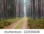 road in the forest | Shutterstock . vector #222530638