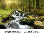 Mountain Stream In Green Fores...