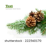 Spruce Branch With Cones In Th...