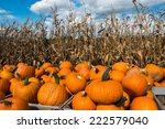 Picked Pumpkins Ready For The...