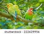 beautiful bird  love bird ... | Shutterstock . vector #222629956