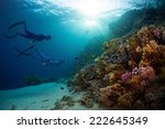 two free divers exploring coral ... | Shutterstock . vector #222645349
