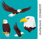 bald eagle vector cartoon... | Shutterstock .eps vector #222668239
