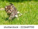 Stock photo kitten in the garden 222669700