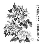 hand drawing chrysanthemum... | Shutterstock .eps vector #222755629