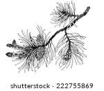 Pine Branch With Cones Vector...