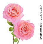 pink rose bouquet isolated on... | Shutterstock . vector #222782314