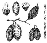 hand drawn cocoa beans set in... | Shutterstock .eps vector #222793933