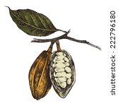hand drawn cocoa beans in... | Shutterstock .eps vector #222796180