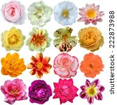 Stock photo set of colorful seasonal blooms 222873988