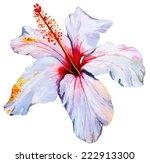 Vector Hibiscus. Single...