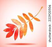 orange watercolor painted... | Shutterstock .eps vector #222920506