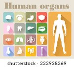 icons of internal human organs... | Shutterstock . vector #222938269