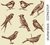 wild birds | Shutterstock .eps vector #222961519