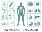 human body with internal organs ... | Shutterstock . vector #222965200