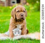 Stock photo bordeaux puppy dog hugs newborn kitten on green grass 223005154
