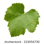 Grape Leave Isolated On The...