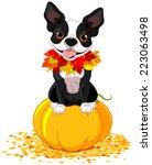 boston terrier sits on a pumpkin   Shutterstock .eps vector #223063498