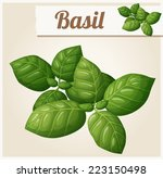 basil leaves. detailed vector... | Shutterstock .eps vector #223150498