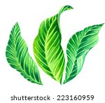 set of exotic leaves  isolated... | Shutterstock . vector #223160959